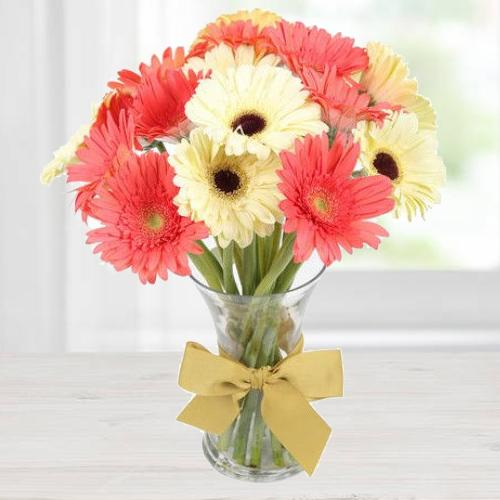 Delicate Dazzle Gerbera Collection