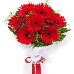 Breezy Enigma Red Gerbera Bouquet